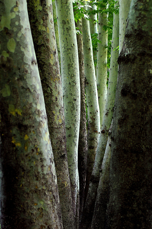 Trees and Crows, 2006 - Abbas Kiarostami