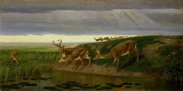 Deer on the Prairie - William Holbrook Beard