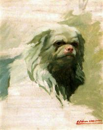 Portrait of dog - Alejandro Cabeza