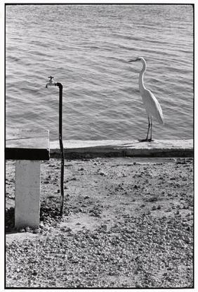 Florida Keys, 1968 - Elliott Erwitt