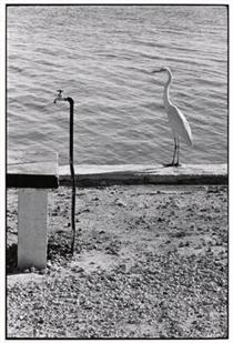 Florida Keys - Elliott Erwitt
