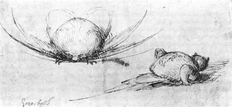 Animal studies - Hieronymus Bosch