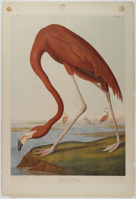 Famous Audubon Paintings