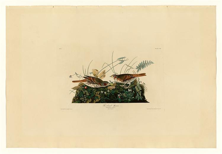 Plate 108 Fox-coloured Sparrow - John James Audubon