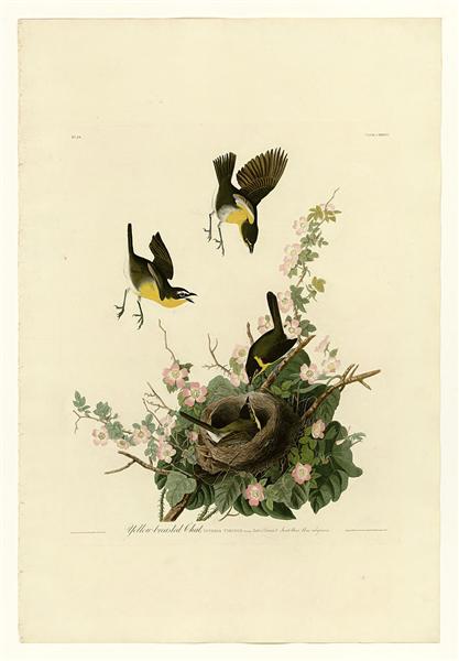 Plate 137 Yellow-breasted Chat - John James Audubon