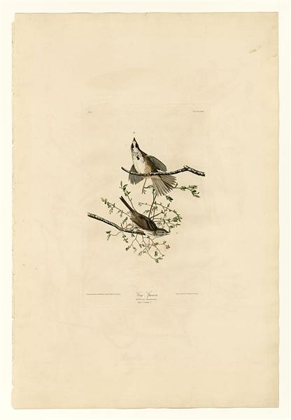 Plate 25. Song Sparrow - John James Audubon