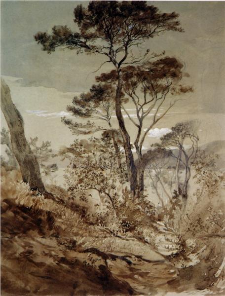 Stone Pines at Sestri, 1845 - John Ruskin