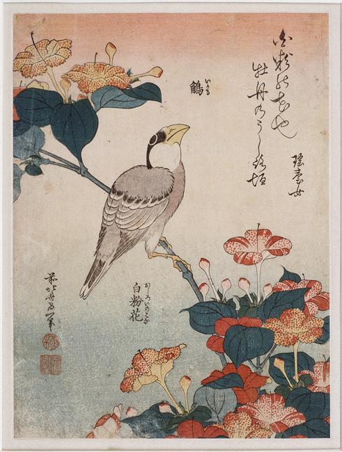 Stili e forme di pittura giapponese... Big-beak-and-mirabilis