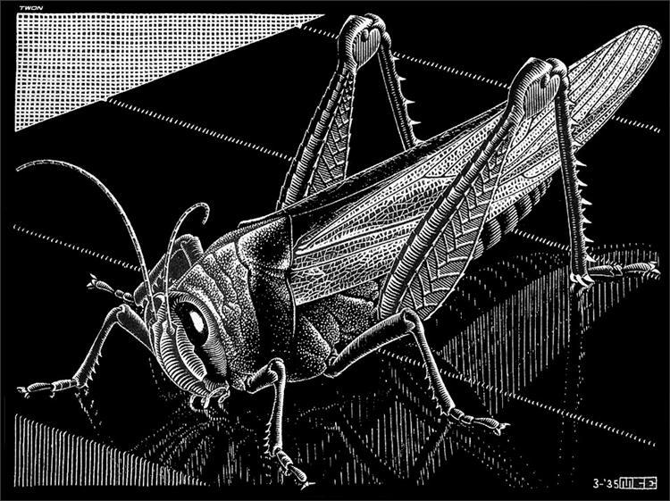 Grasshopper, 1935 - M.C. Escher