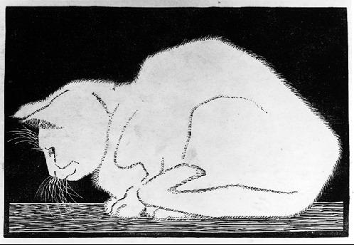 White Cat II, 1919 - M.C. Escher