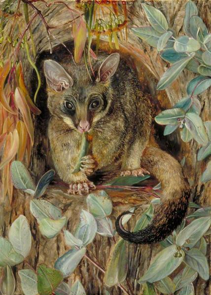 Possum up a Gum Tree, 1880 - Marianne North