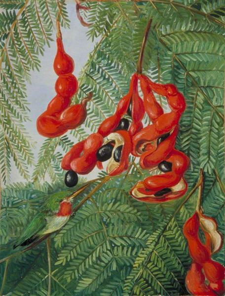 The Wild Tamarind of Jamaica with Scarlet Pod and Barbet, 1872 - Marianne North
