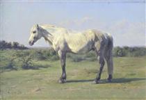 A Grey Horse in a Field - Роза Бонёр