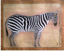 Zebra - Ustad Mansur